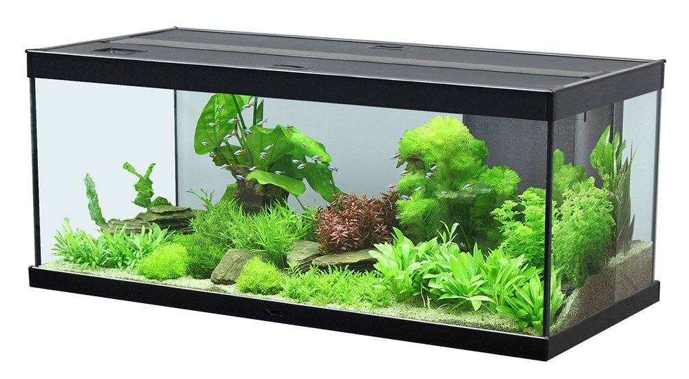 aquatlantis style led 100x40x40cm aquarium in schwarz zoo co. Black Bedroom Furniture Sets. Home Design Ideas