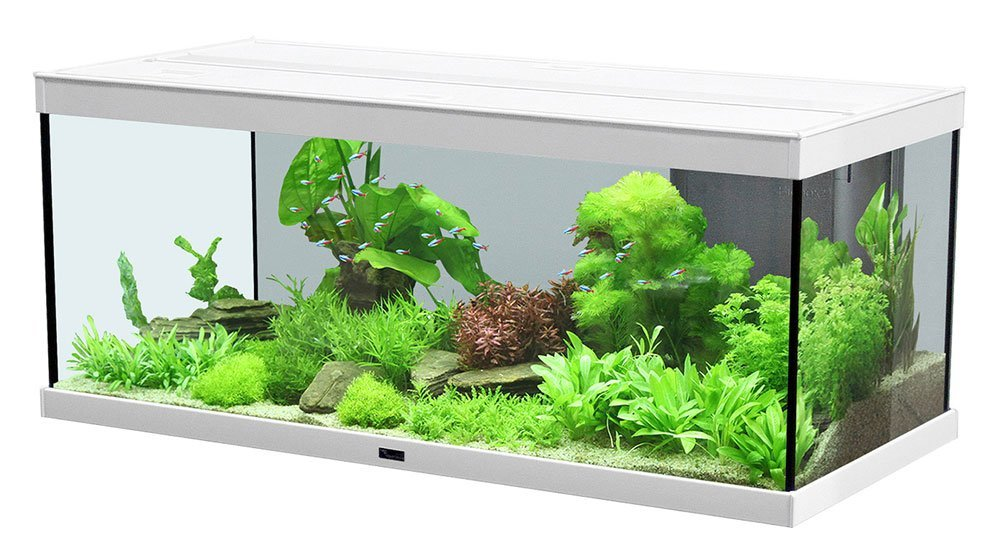 Trendig aquatlantis Style LED 100x40x40cm Aquarium in weiß | ZOO & Co. PY94