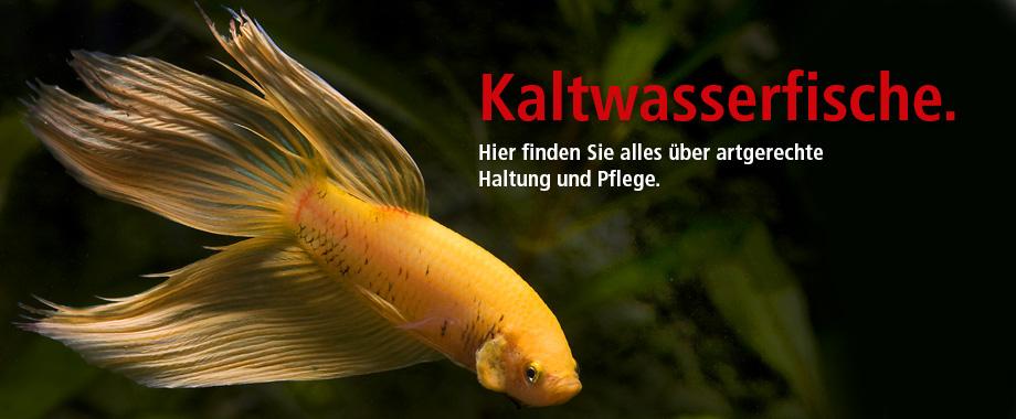 kaltwasserfische, goldfische bei zoo und co