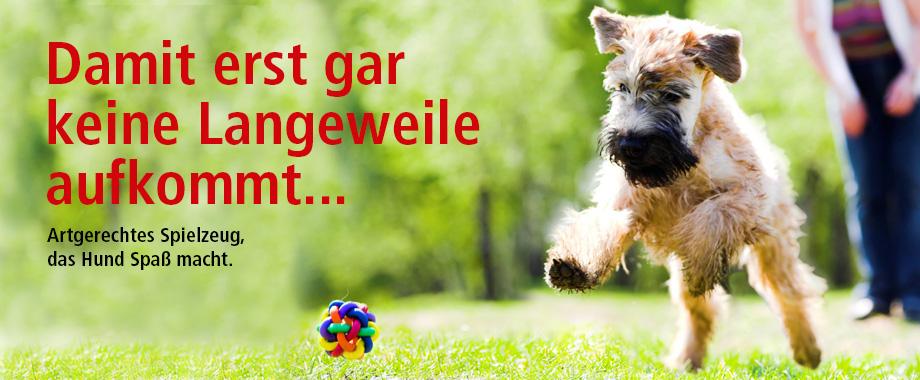 Hundespielzeug - Spielzeug für Hunde