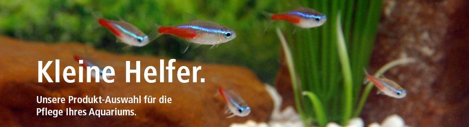 pflege, zubehör, aquarium