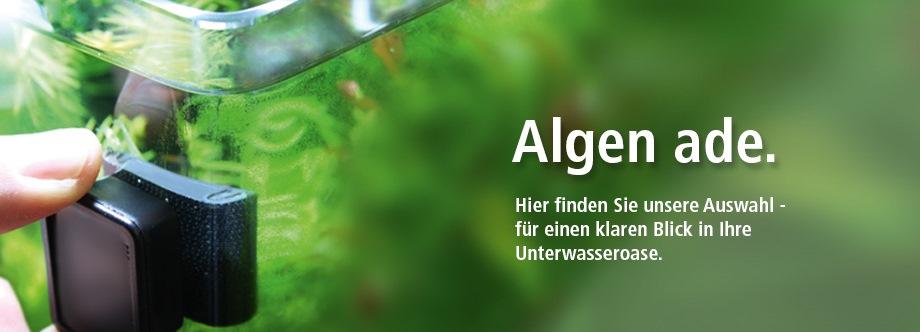 anti alge aquarium