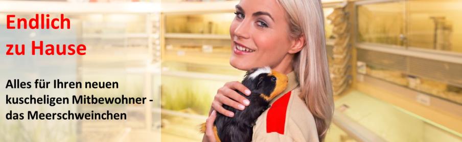 erstausstattung meerschweinchen zooundco