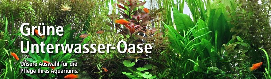 gesunde grüne unterwasserpflanzen