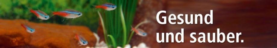pflege für aquarium zooundco