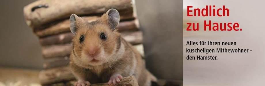 erstausstattung hamster online kaufen