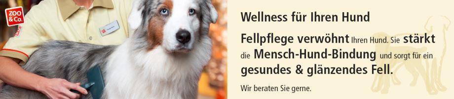 wellness für hunde und katzen