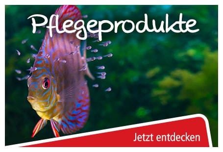 pflege für aquarien online bestellen