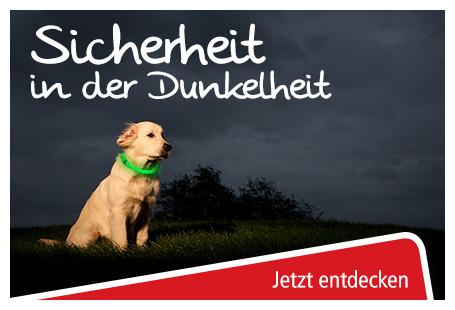 sicherheit hunde
