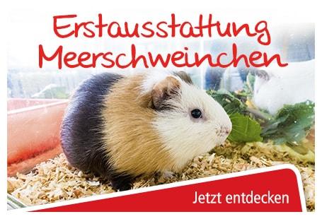 futter und zubehör für meerschweinchen online bestellen